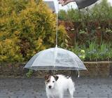 Prozirni kisobran dizajniran za pse ugradjena kuka